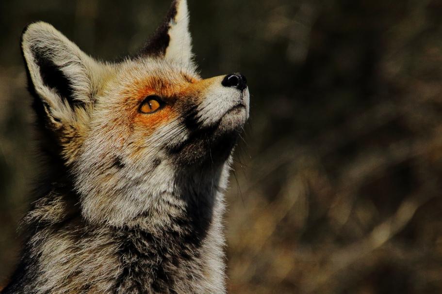 Hides fotográficos en la Sierra de Gredos